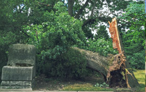 To the Class of 2021: Be Resilient, Like a Tree