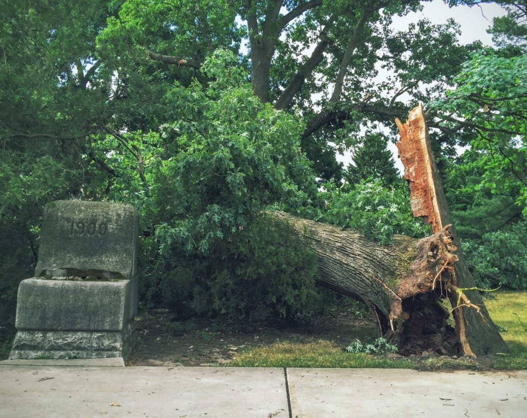 a tree that has fallen down